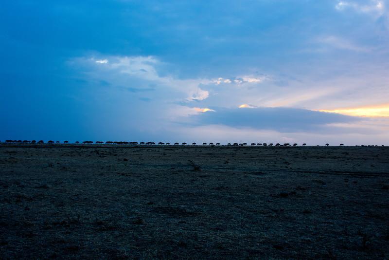 047 Wildebeast KenyaTrip2013-00796
