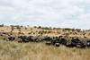 025 Wildebeast KenyaTrip2013-01834
