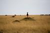 023 Topi on termite mound KenyaTrip2013-01074