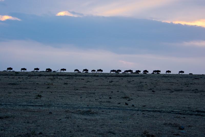 046 Wildebeast KenyaTrip2013-00798
