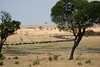 026 Wildebeast KenyaTrip2013-00956