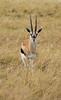 021 Gazelle KenyaTrip2013-00819