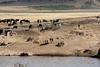 031 River Crossing KenyaTrip2013-01219
