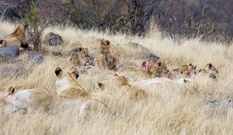 078 Lion pride KenyaTrip2013-00693