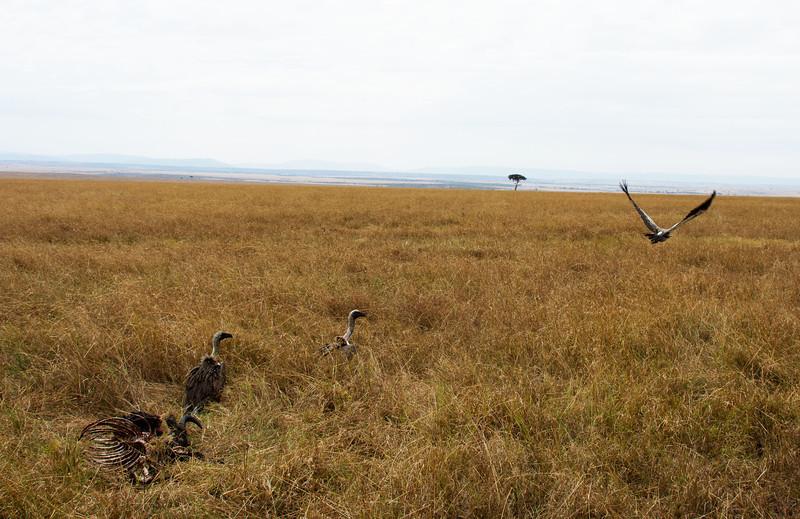 063 Vultures KenyaTrip2013-01034