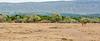 013 Antelope KenyaTrip2013-00450