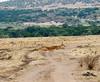 014 Antelope KenyaTrip2013-00453