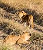 102 Lion cubs KenyaTrip2013-01377