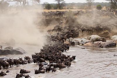Great migration crosses the Mara River