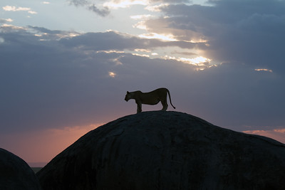 Namiri Plains, Tanzania