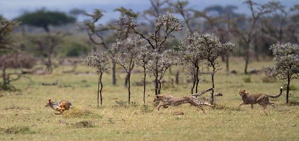 Mara Naboisho, Kenya