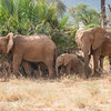 Elephant family, Samburu Game Preserve, Kenya