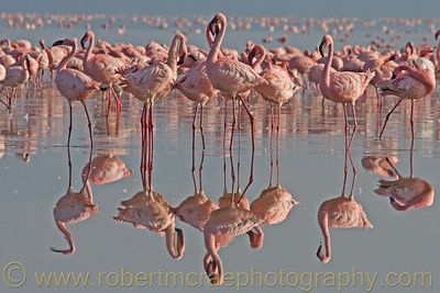 """Pink Ballet"" - Multiple Award Winner"