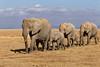 Elephants at Amboseli.
