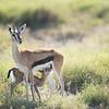 Feeding time at Amboseli National Park, Kenya