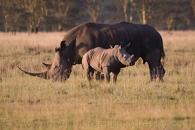 """Baby Rhino and Mom"" - Multiple Award Winner"