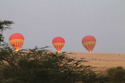 Hot Air Balloons rising at sunrise on the Masai Mara