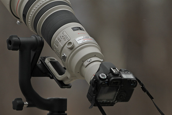 Canon 40D, Canon 600mm F4L with gimbal mounted on a lens collar