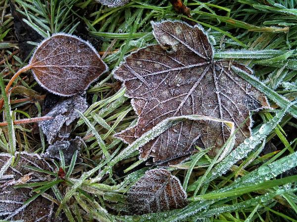 Killiney Hill Frost - Jan'13
