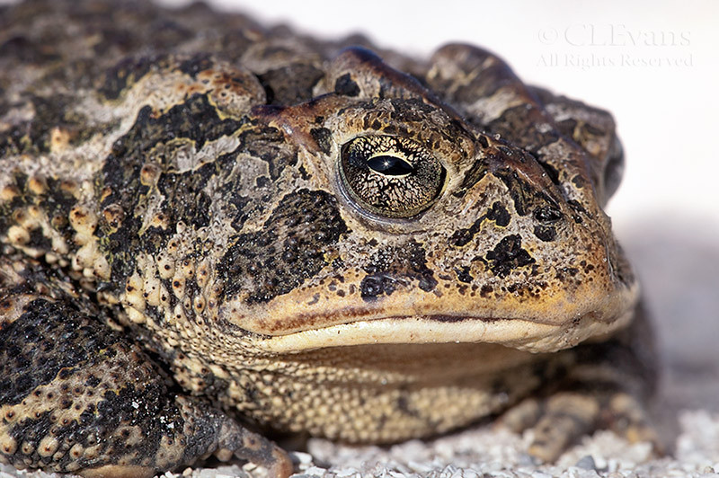 SouthernToad8613