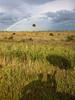 Sunshower (Kissimmee Prairie Preserve)