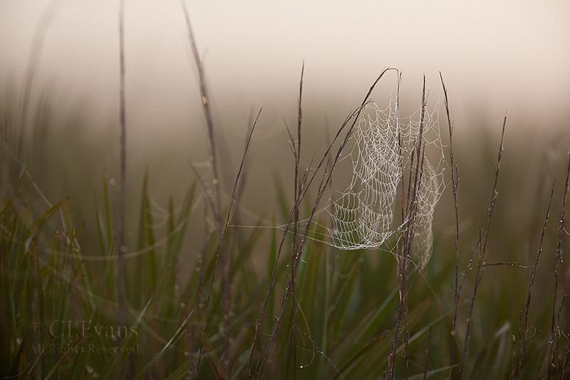 Spiderweb on a foggy prairie morning (Kissimmee Prairie Preserve)