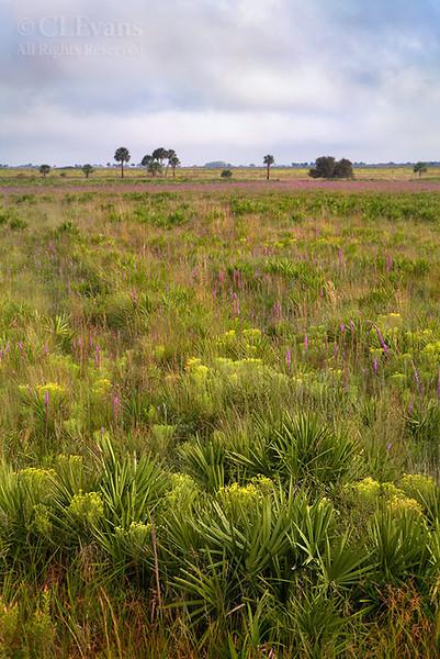 Kissimmee Prairie Preserve in the fall