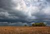 Storm Coming (Kissimmee Prairie)