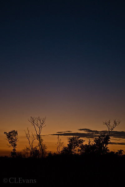 Evening Silhouette (Kissimmee Prairie Preserve)<br /> <br /> (Also have this scene as a horizontal)