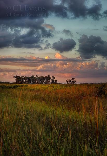 Kissimmee Prairie Preserve - Scenery/Flora