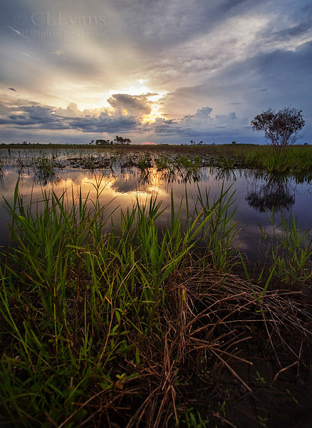 Flooded section of Kissimmee Prairie Preserve in summer.