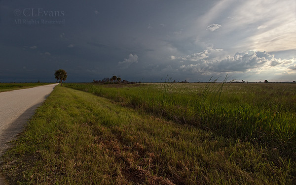 Looking south on Peavine Trail (Kissimmee Prairie Preserve)