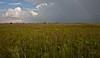 Kissimmee Prairie Preserve/Rainbow