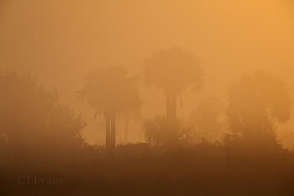 Daybreak and fog (Kissimmee Prairie Preserve)