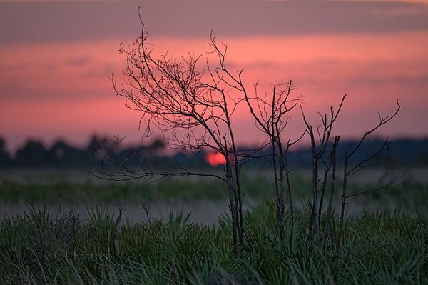 Sundown at Kissimmee Prairie Preserve