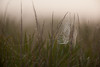 Spiderweb on a foggy prairie morning (Kissimmee Prairie Preserve)