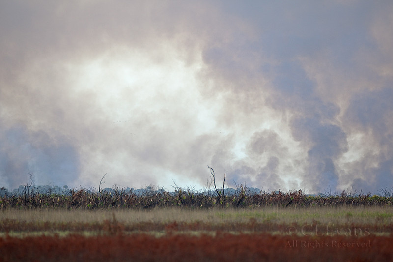 Smoke billows up after a day of prescribed fire (Kissimmee Prairie)