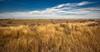 Prescott Prairie in December after summer burn (Kissimmee Prairie)