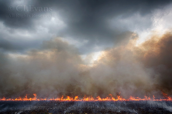 Prescribed Fire Along Military (Kissimmee Prairie)