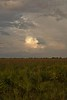 A Fall Evening at Kissimmee Prairie Preserve