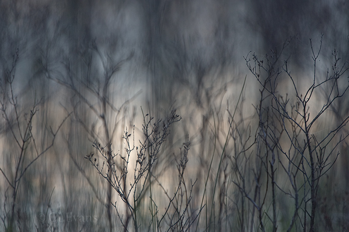 A pattern of bare shrubs silhouetted against evening sky reflection in water, Kissimmee Prairie.