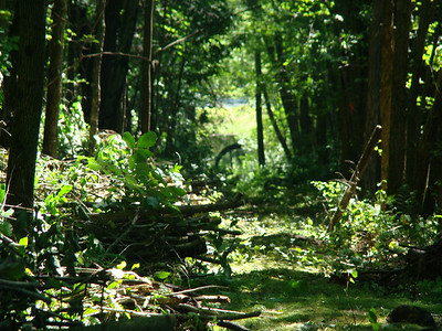 Kiwanis Trails