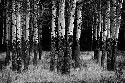 tree clusters