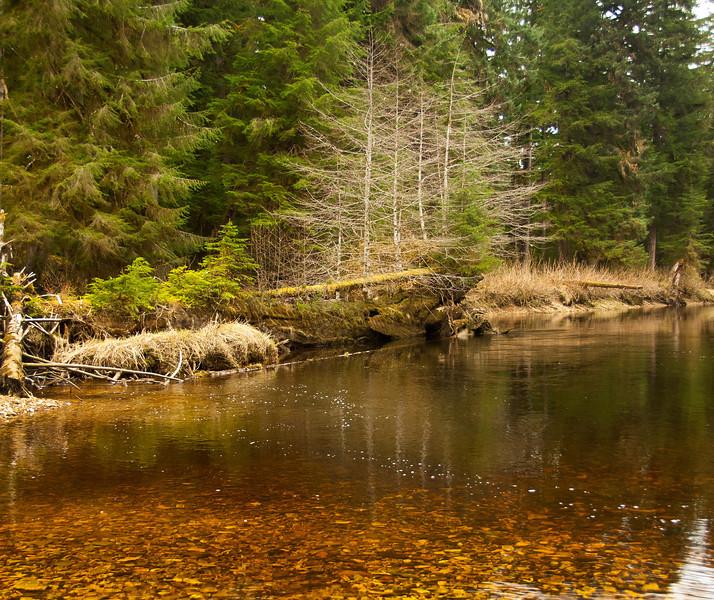 """37 inch Steelhead caught here -- """"First Fish Log""""  Kadake Creek, Kuiu Island, Alaska April 2013"""
