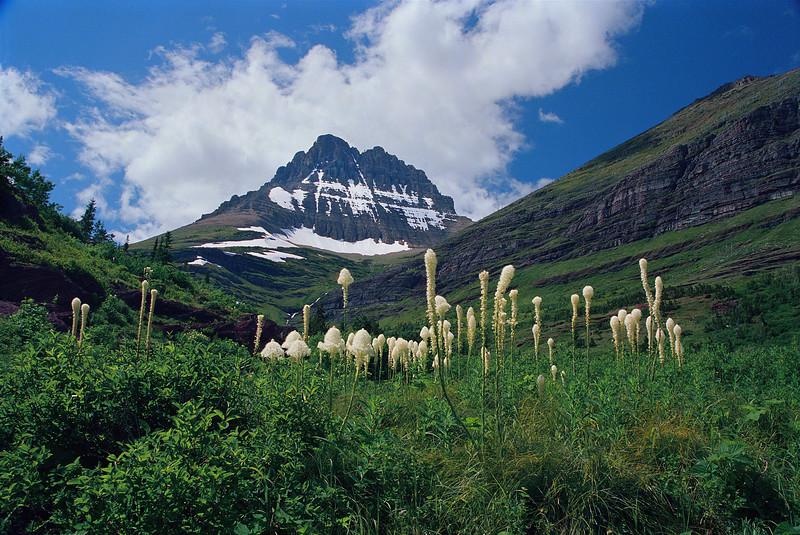 Mt. Wilbur with Beargrass-82