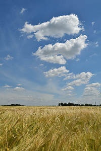 Stunning sky over a field of barley on Bracebridge Heath