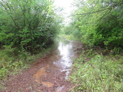 "The redbud trail about 50 feet from its head.  The water is about 13"" deep here with some good-sized carp swimming in it."