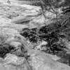 LaBarque Hills Conservation Area MO-1539