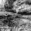 LaBarque Hills Conservation Area MO-1495
