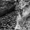 LaBarque Hills Conservation Area MO-1533